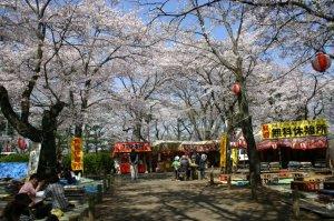 護国神社境内で楽しむ花見客
